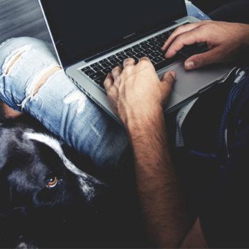 Animali in ufficio: quando i benefit riguardano i pets