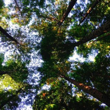 Green jobs, in Italia crescono le imprese che investono in sostenibilità e risparmio energetico